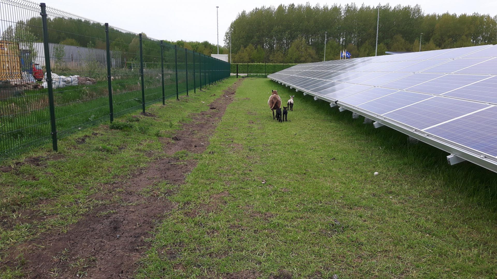 Solarpark Galecop